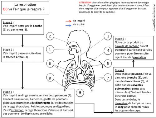 "Carte mentale : ""la respiration"""