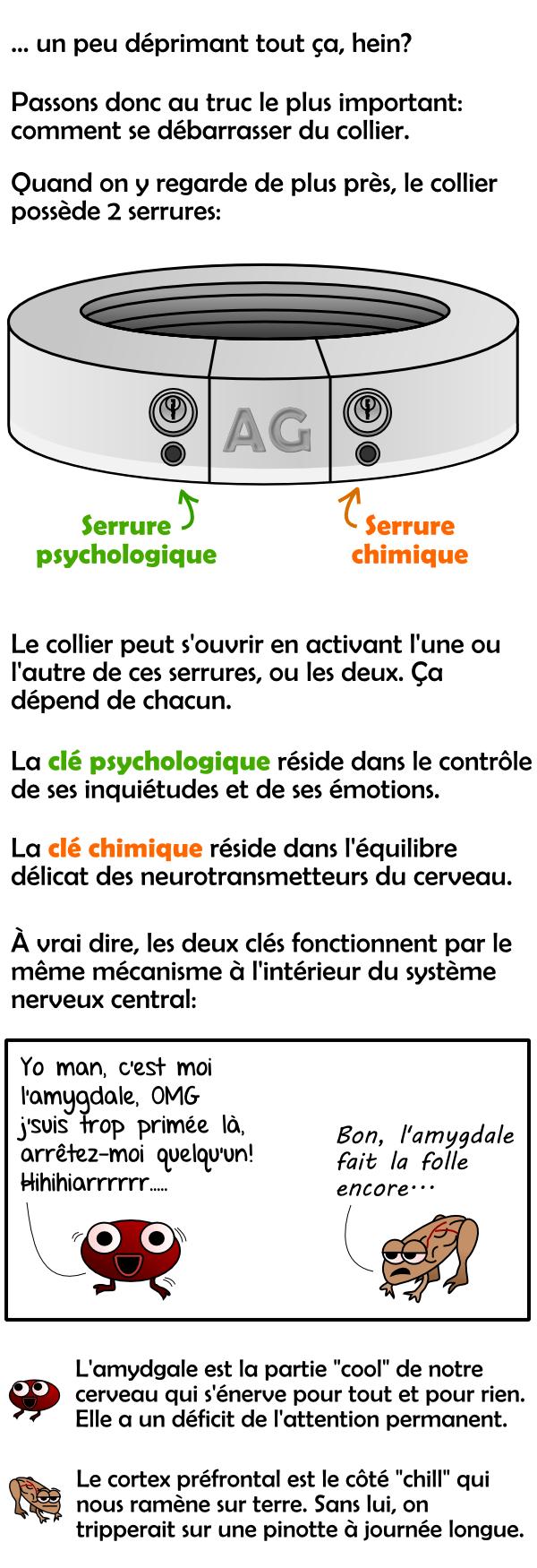 Les serrures psychologique et chimique du collier de métal et intro sur l'amygdale et le cortex préfrontal