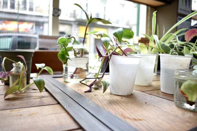 Plant Swap - Seeds Brussels - Le Plume Dettagli bcchieri