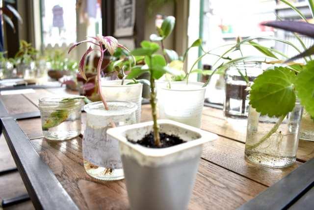 Plant Swap - Seeds Brussels - Le Plume Dettagli vasetti