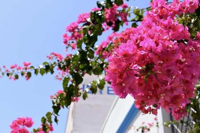Calasetta Fiori Rosa- Le Plume