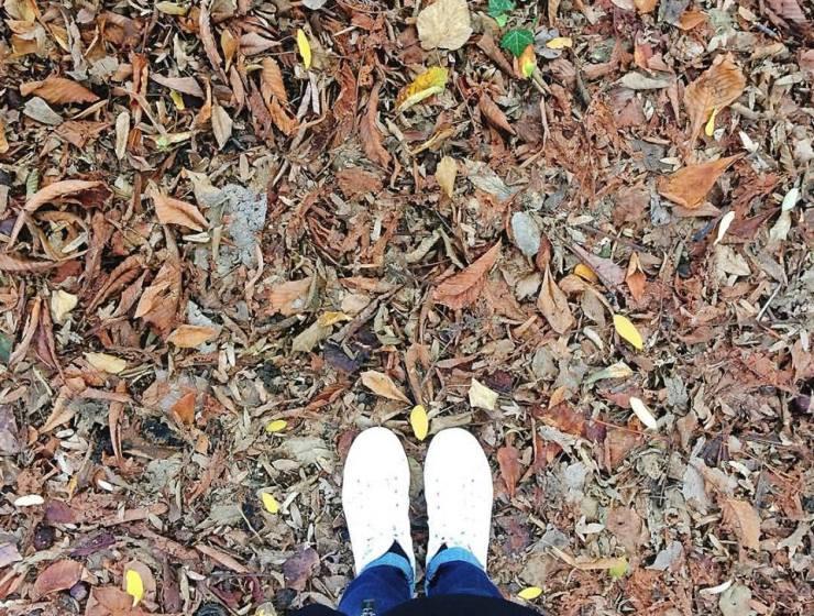 Autunno foglia - Novembre - Le Plume