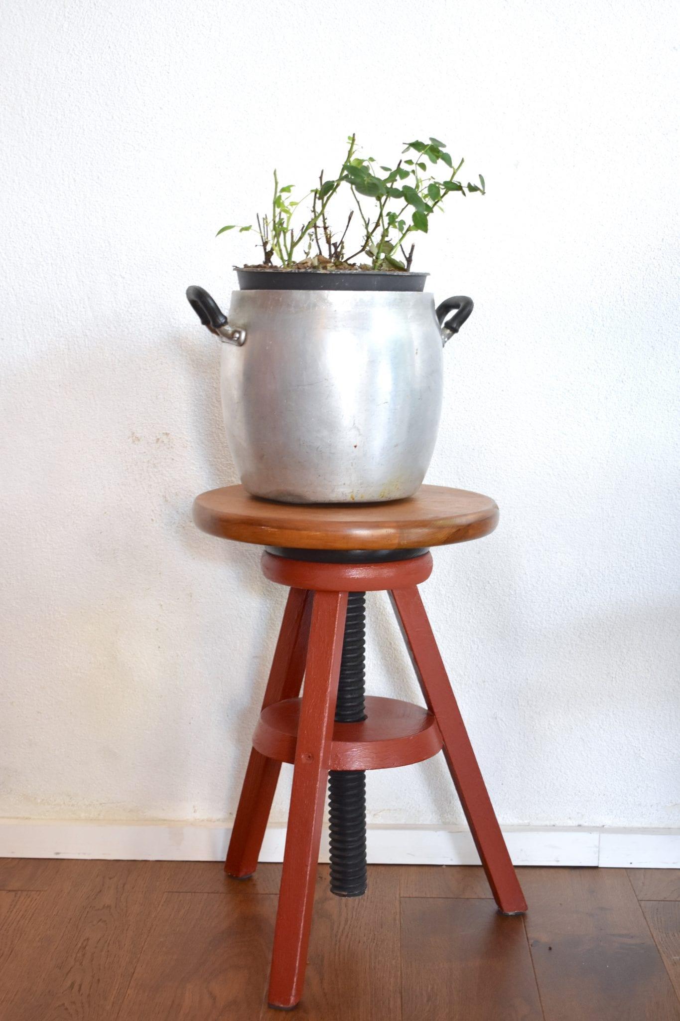 dettaglio pianta - PestaPepe - LePlume