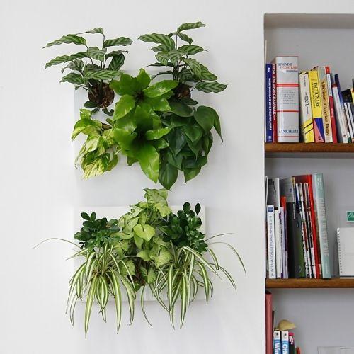 HoH Ortis Green - novità sulle piante - LePlume