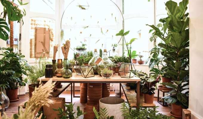 Atmosfera Botanica Agave Bruxelles - Le Plume