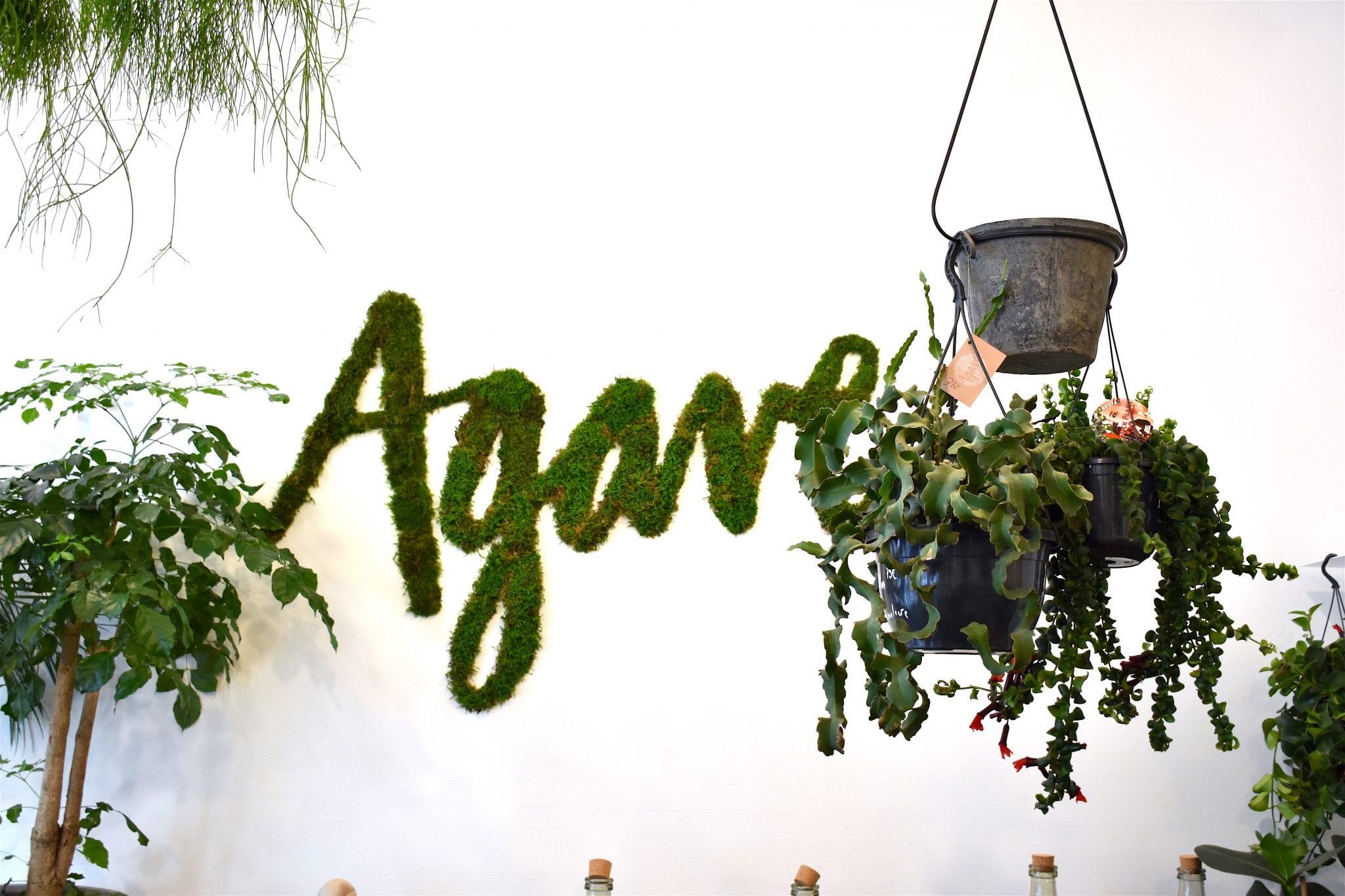 nome agave bruxelles - atmosfera botanica - le plume