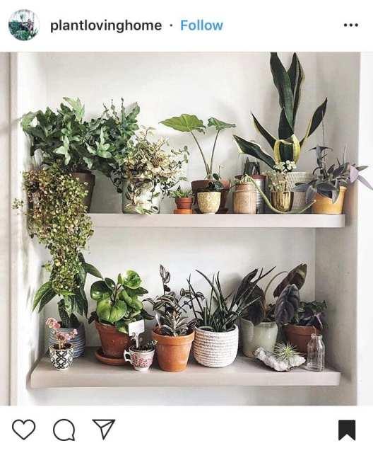 scaffale vasi misti - Indoor garden - Le plume