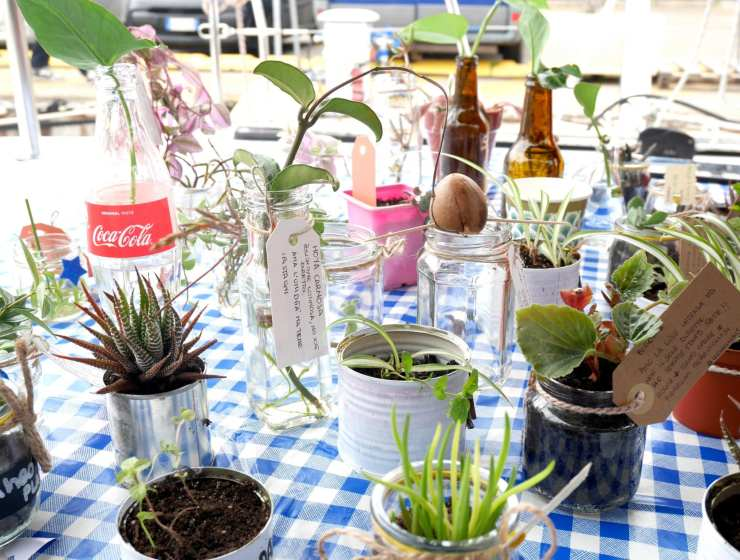 Plant Swap On board 6 - Le Plume