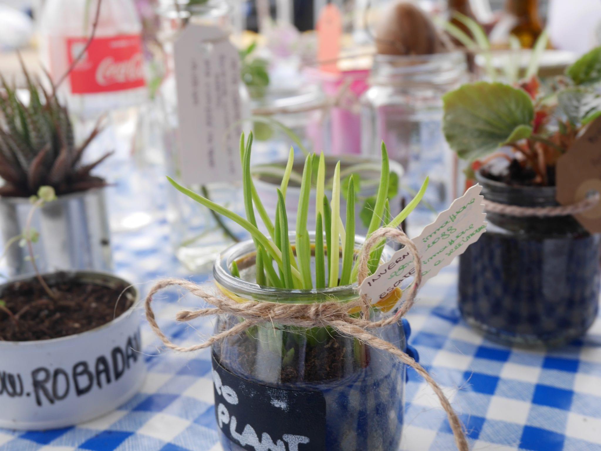 Senecio plant swap on board - Le Plume