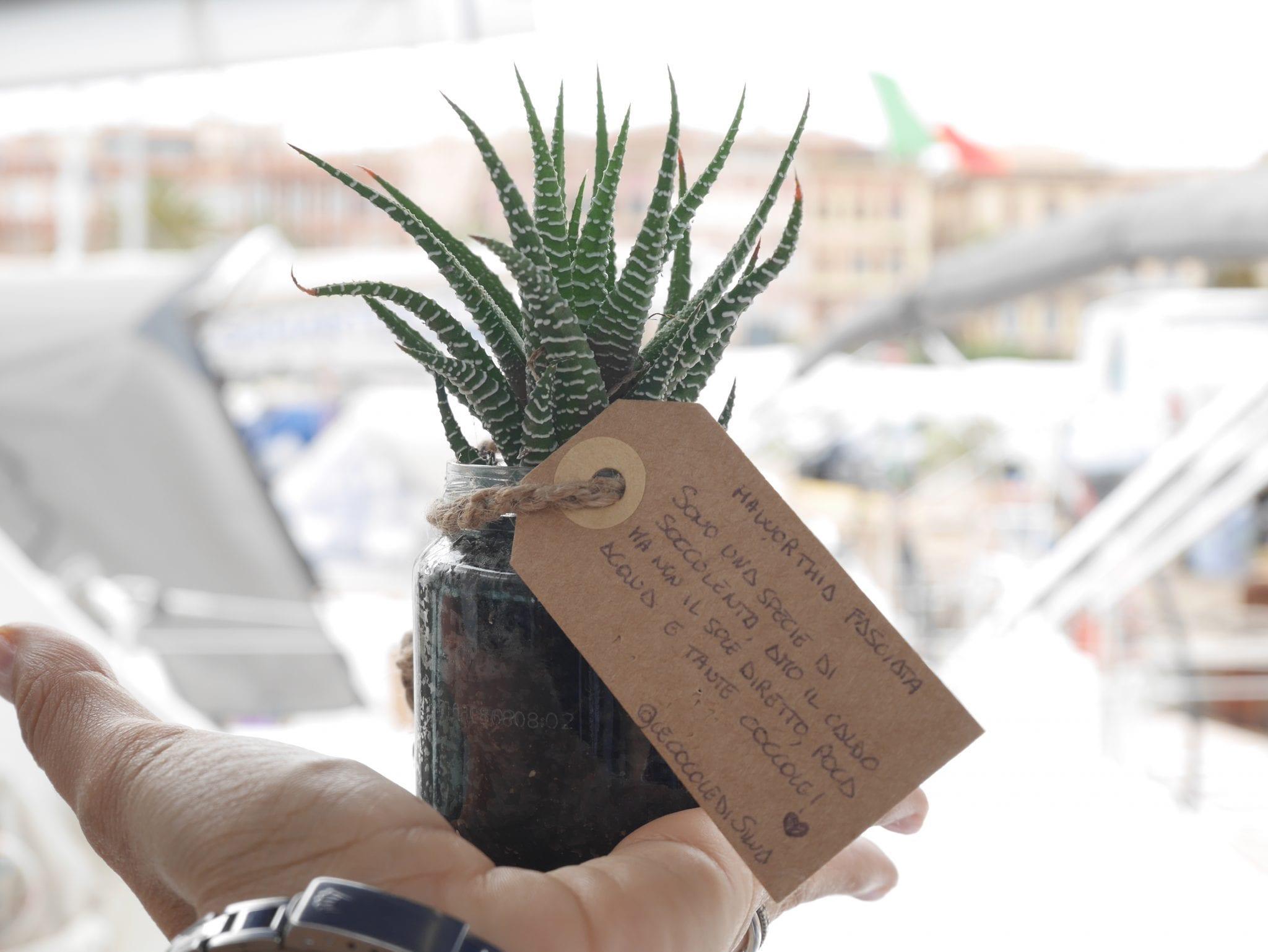 haworthia fasciata Plant swap on board - Le Plume