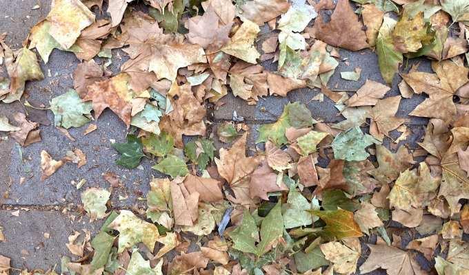 autunno - Le Plume