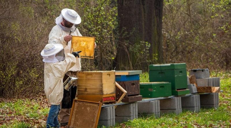 Une année noire pour les apiculteurs