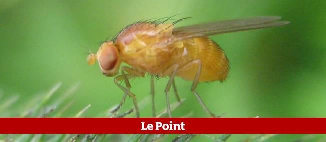 Quand les mouches se so lent pour survivre le point l 39 espace libre de sami chaiban - Se debarrasser des guepes ...