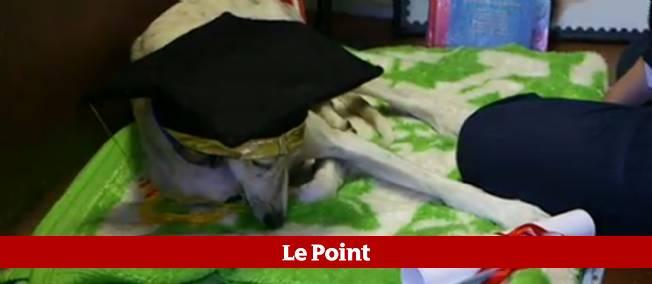 Le chien Pete est diplômé d'un MBA de l'Université américaine de Londres.