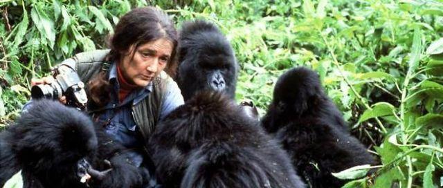 gorillas in rwanda park