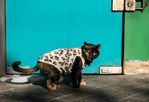Shanghai, qui aime à se voir comme la ville la plus moderne de Chine, compte à elle seule un million d'animaux domestiques, pour une population de 24 millions d'habitants. © Johannes EISELE AFP