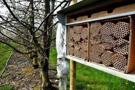 Des abeilles solitaires volent au secours des vergers français