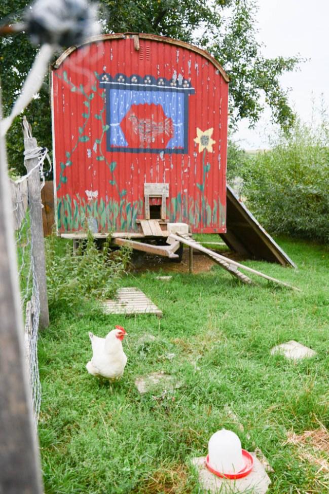 Georgenhammer Hühner