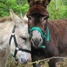 Nos ânes - Tipis d'hôtes Languidic Morbihan