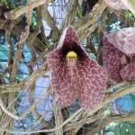 Jardin botanique Deshaies