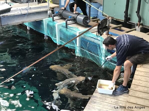 nourrissage reqyuin aquarium lyon