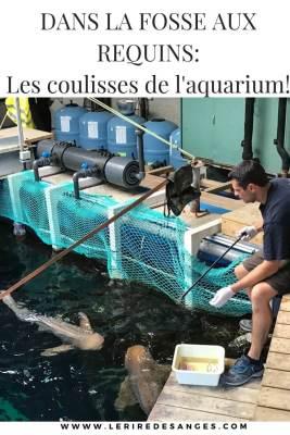 coulisses aquarium lyon