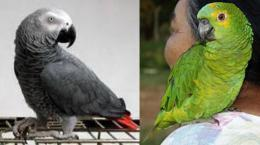 papagaios.jpg