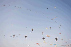 cerf-volants