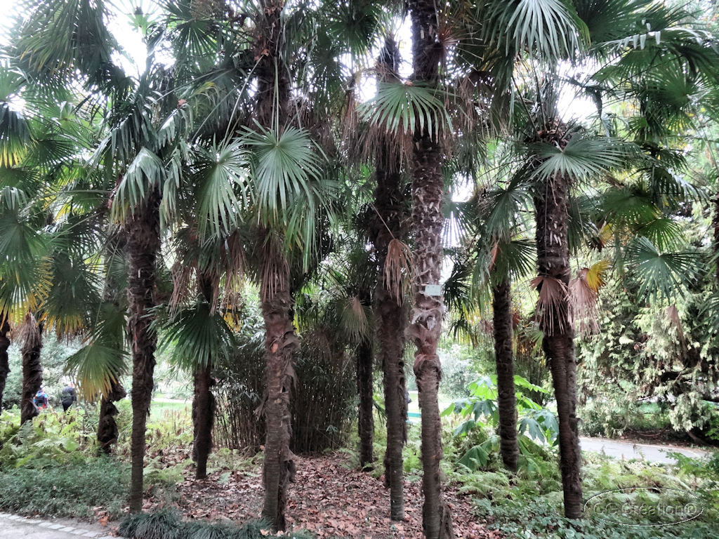 visite du jardin des plantes angers 49 2 2 les mauges en anjou fr. Black Bedroom Furniture Sets. Home Design Ideas