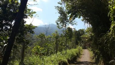 Découvrir Bali autrement : escalade du volcan Batukaru. Départ de la piste