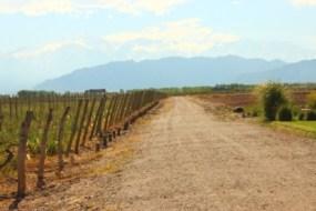 Voyage à Mendoza du blog de Julia