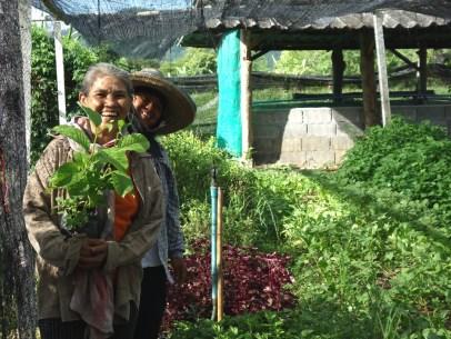 Plantes médicinales et aromatiques