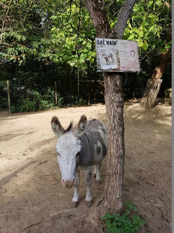 âne nain - Zoo de la boissière du doré