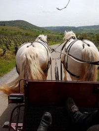 balade en calèche au cœur des vignes du Rougier de Marcillac