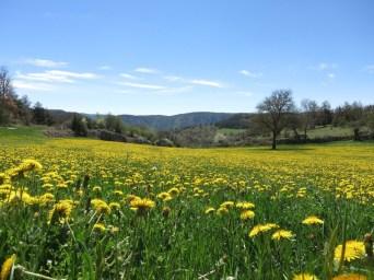 Paysage de campagne dans les Gorges du Tarn