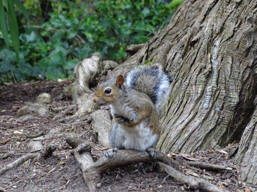 écureuil au Golden Gate Park - San Francisco