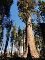 Crescent Meadow - Sequoia national park - USA 2