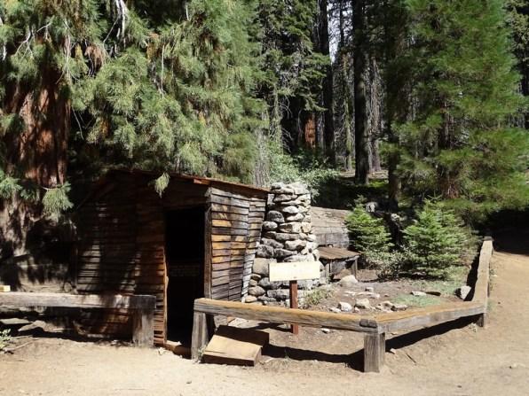 La Tharps's Log - Sequoia Park