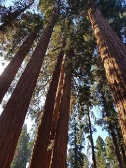 Sequoia Park -USA