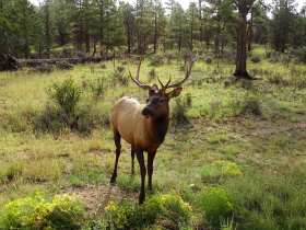 Rencontre animale à Grand Canyon