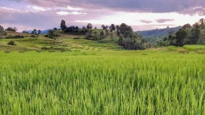 Paysages de rizières sur le trek Kalaw - Lac Inle