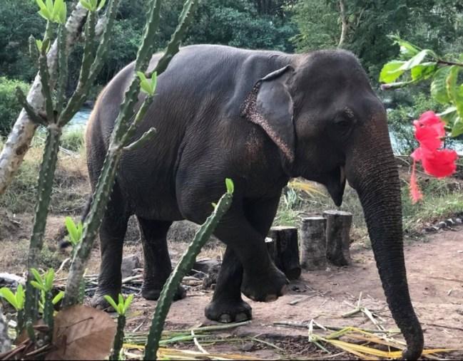 bain des éléphants à Tad Lo sur le plateau des Bolovens