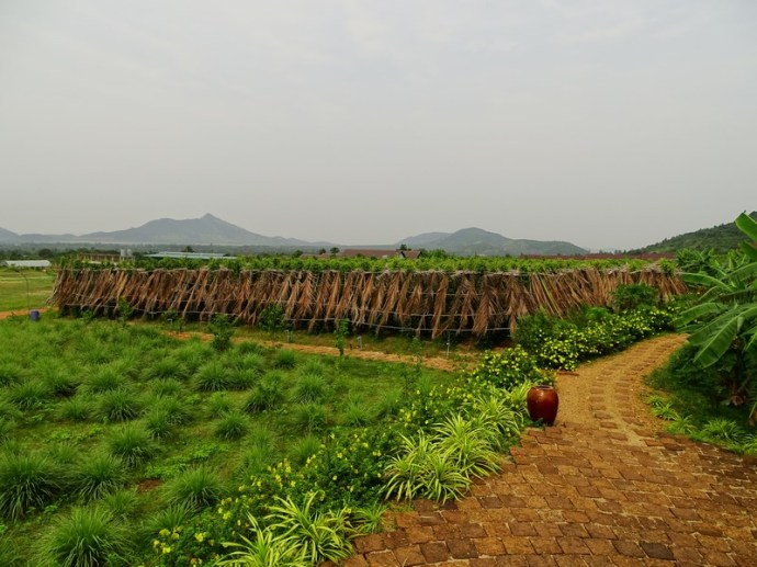 Plantation de poivre - Kampot