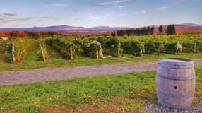 vignes dans les Cantons de l'Est - Canada