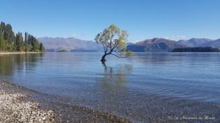 Wanaka tree Nouvelle-Zélande