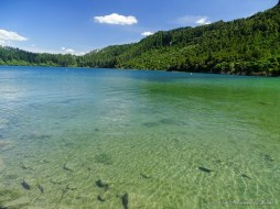 lac vertRotokakahi - Rotorua - Nouvelle-Zélande