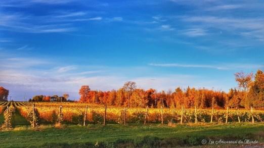 Route des vins - Cantons de l'Est- Canada