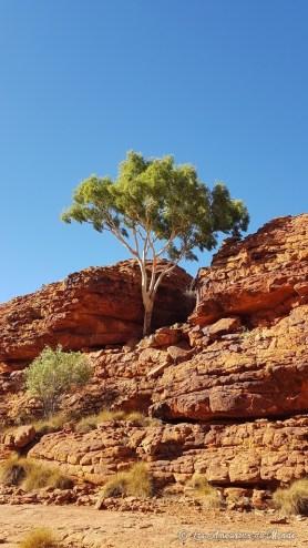Kings Canyon Rimwalk - Australie