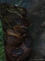 serpent au Gorge Wildlife park - Adelaïde - Australie