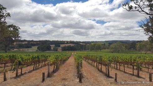 vignes près de Adélaïde - Australie